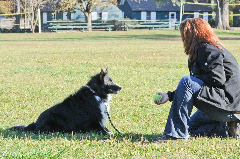 Dog and his human
