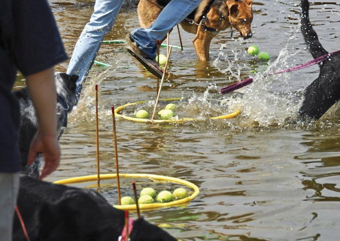 Dogs Hula Hoops Tennis Balls