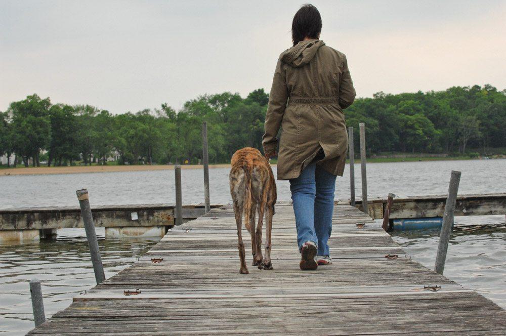 dog on a pier