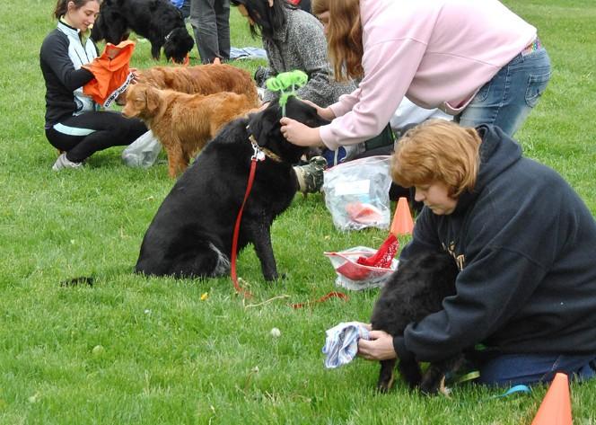 dog relay race