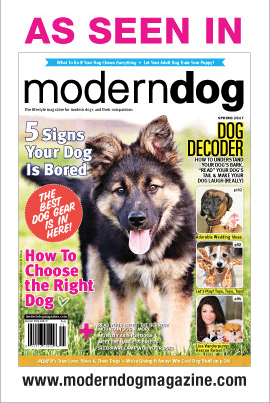 Modern Dog Magazine Features Camp Dogwood