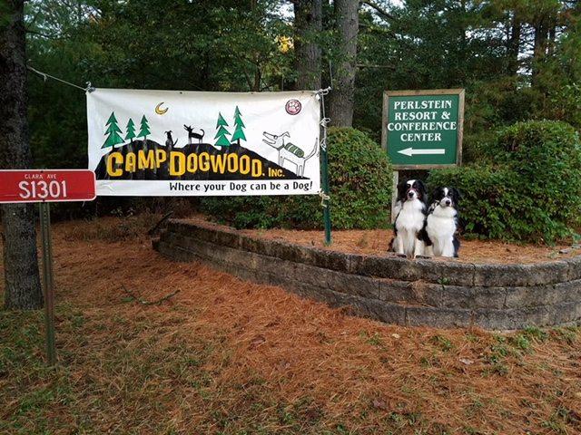 camp classics camp dogwood
