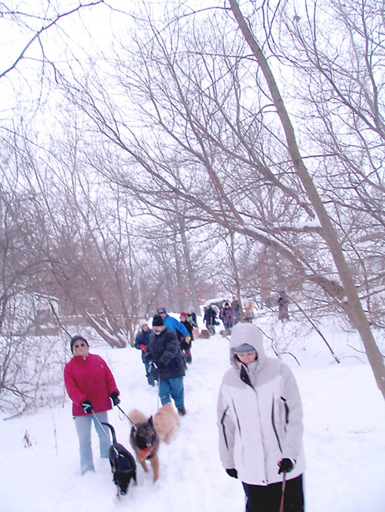 Winter Dog Camp Hike